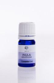 Inula - Inula graveolens