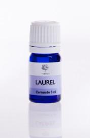 Laurel - Laurus nobilis