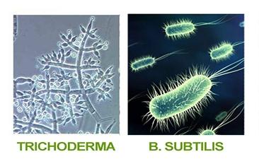 Biofungicidas